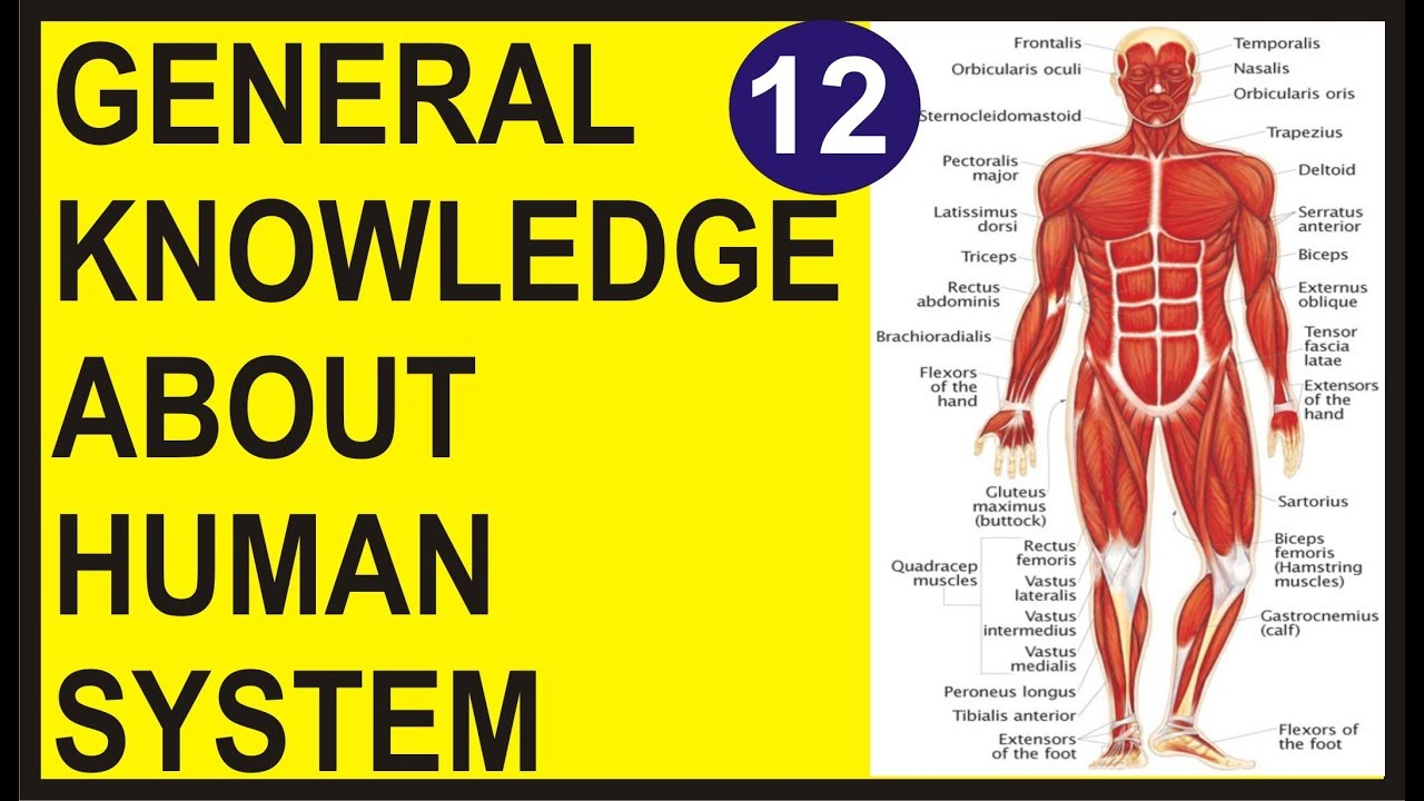 General Knowledge About Human System The Human Body Quiz About