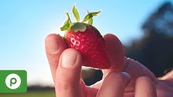 January - March   At Season's Peak: Strawberries from Plant City, Florida at Publix