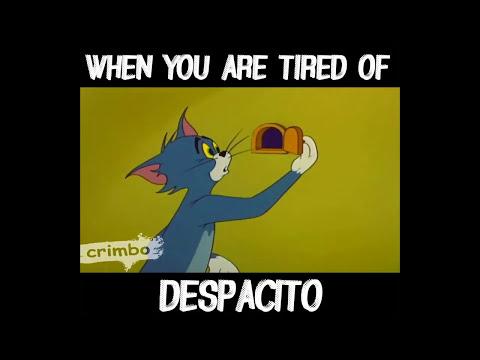 Tom and Jerry despacito