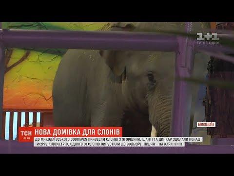 До зоопарку у Миколаєві з Угорщини нарешті дісталися слони Шанті й Дінкар