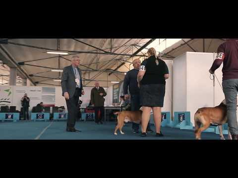 BANJA LUKA DOG SHOW 2018