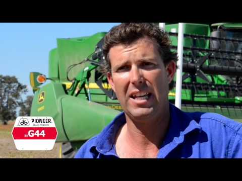 Pioneer® brand G44 sorghum the top performer on northern NSW property