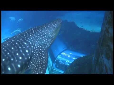 Donnie & Selena swim with the Whale Sharks at the Georgia Aquarium in Atlanta.