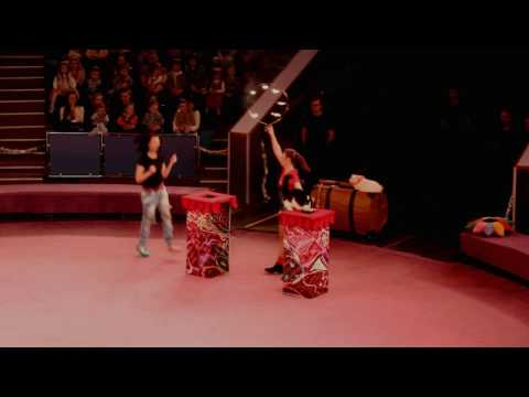 Cats circus Savitsky