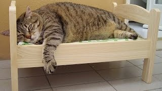 Самые смешные кошки и коты на видео! Лучшее смешное видео про котов и кошек. Best funny cat.