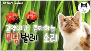 video for cat to watch! Ladybug sound!