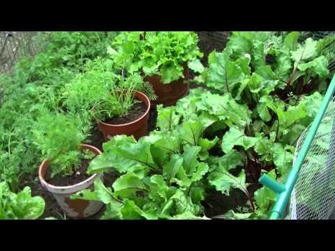 Garden Wars    Dinnington Vs Maltby.....Let The Games Begin Jill...lol..