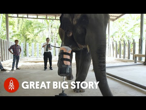 One Step At A Time: The First Elephant Prosthetics