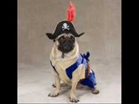 Stupid Dogs In Costumes