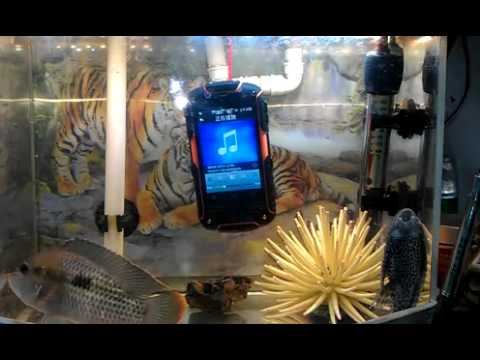 Rugged Waterproof Dual SIM Android Phone - Shockproof Dual Sim Smartphone Test Video
