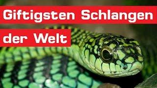Die 15 giftigsten Schlangen der Welt