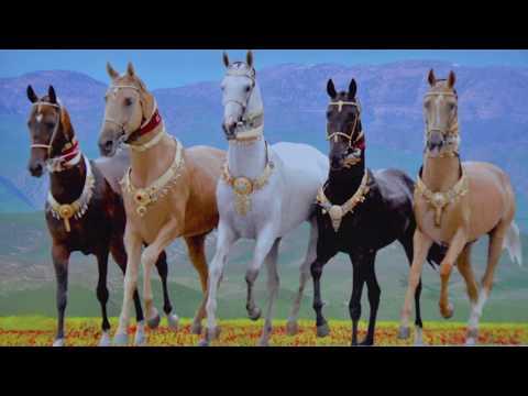 Achal Tekkiner Pferderennen Ashgabat Turkmenistan