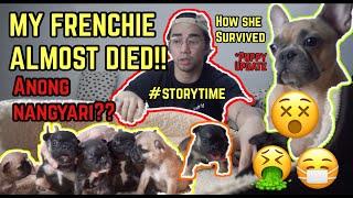 MY FRENCH BULLDOG ALMOST DIED AFTER GIVING BIRTH!! ANO NANGYARI?? | VLOG 12 | TRAPBULLYZ KENNEL