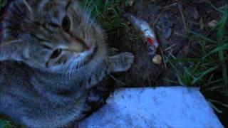 котики кушают рыбку