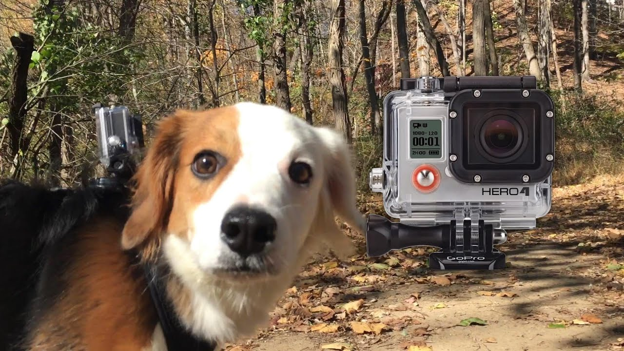 GoPro Hero 4: Being a Dog in 4K!