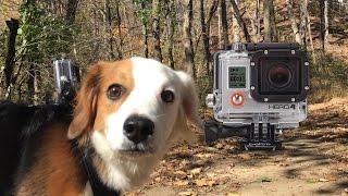 GoPro Hero 4: Being a Dog in 4K!