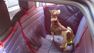 Автогамак для собак - flick