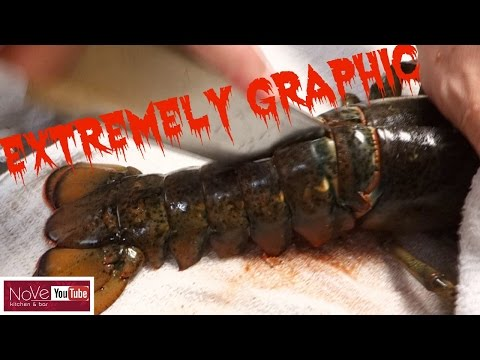 EXTREMELY GRAPHIC: Maine Lobster Dynamite - How To Make Sushi Series