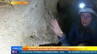 """Останки древних животных обнаружили в пещере """"Таврида"""""""