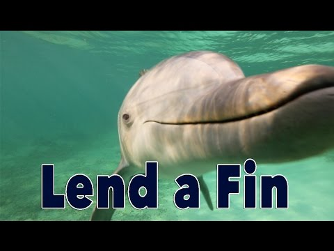 Lend a Fin: Can Dolphins Think About Cooperation?