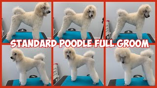Standard Poodle elegant haircut/ Grooming my 6 months old Standard Poodle puppy.