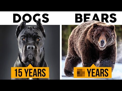 How Long do these Animals Live ?
