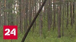 Расследование Эдуарда Петрова. Профессия - лесовор - Россия 24