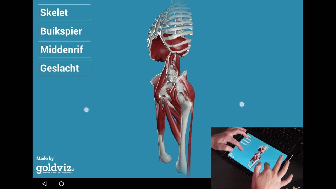 3d Anatomy Breathing App - YouTube