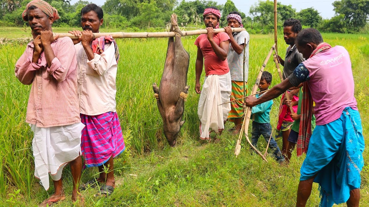 Download How to Clean and Cook full 50 kg PIG in their village style   BIG PORK meat cooking by tribal people