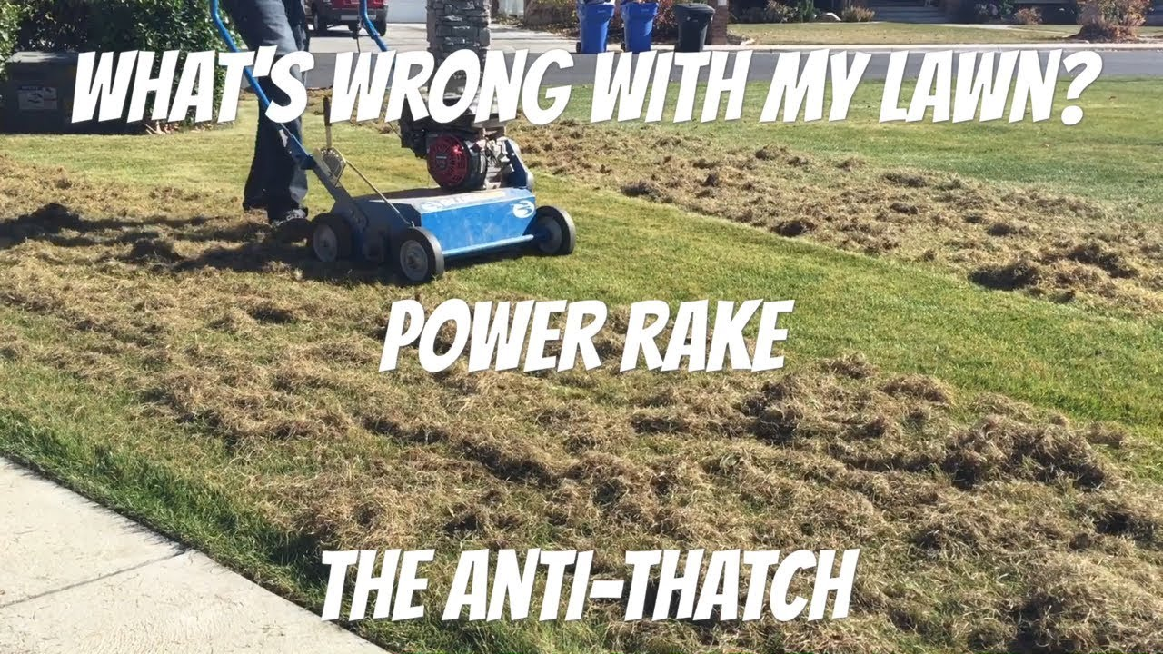 Why And How To Power Rake Or Dethatch A Lawn Youtube