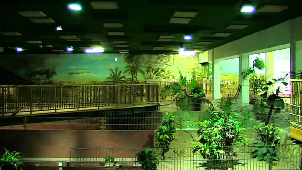 meeres aquarium zella mehlis youtube. Black Bedroom Furniture Sets. Home Design Ideas