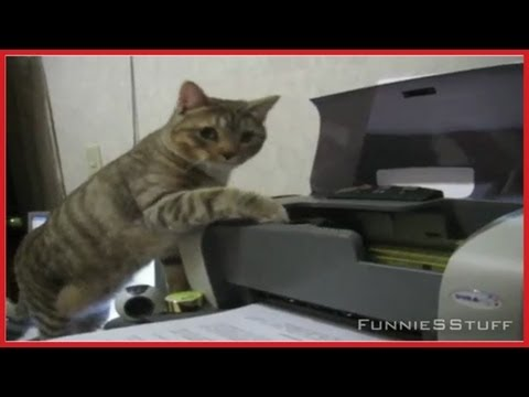 Consider, Pussy vs printer with you