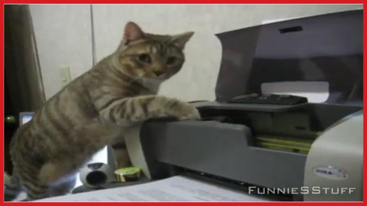 Кот и принтер.