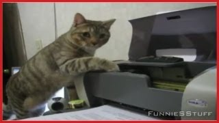 The Best of Cats vs. Printers Compilation