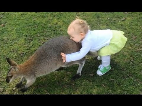 AYLA PLAYS WITH A WALLABY