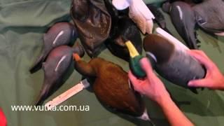 видео Утка Лысуха - как выглядит, описание и фото