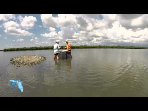 Episode 9: Oyster Reef Communities   Water As Habitat