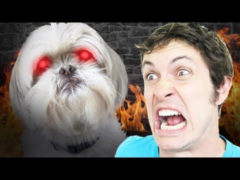 EVIL TALKING DOG!
