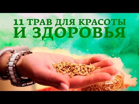 Травы для печени - полезные травы для печени