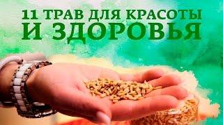 Какие травы полезны: 11 трав для красоты и здоровья [Настоящая Женщина]