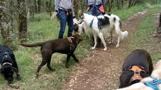Educa Patte - Marche cani nocturne du 16 juillet 2021