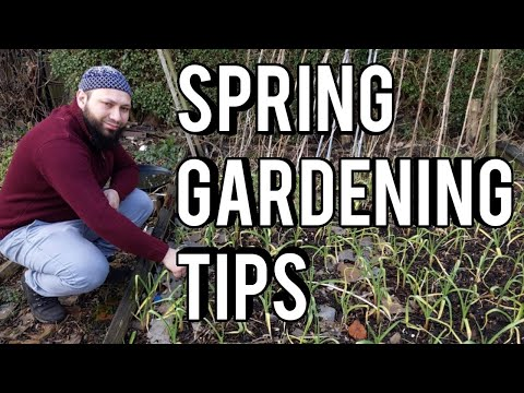 What To Do In The Garden In Spring – March Gardening Jobs