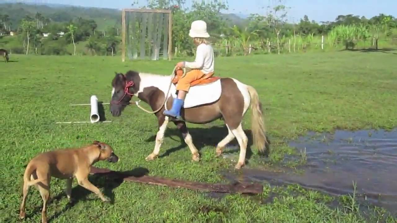 Parelli natural horsemanship and webcam