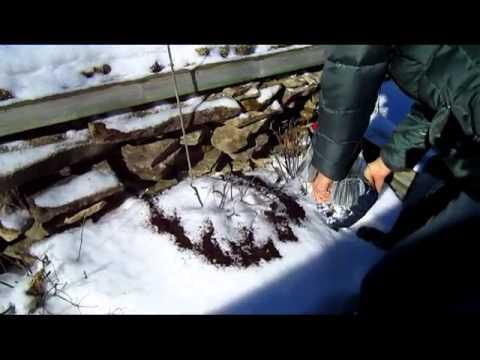 Free Coffee Grounds - Wisconsin Garden Video Blog 369