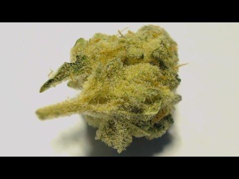 Redrum Marihuana Cepa (Fotos)