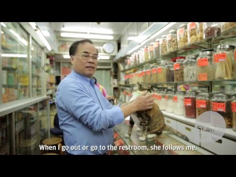 Viral sensation Wan Chai Cat performs tricks