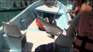 dolphin jumps in the boat