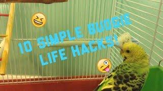 10 Simple Budgie Life Hacks!