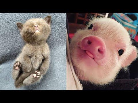 Animals SOO Funny! Cutest Baby animals Videos Compilation