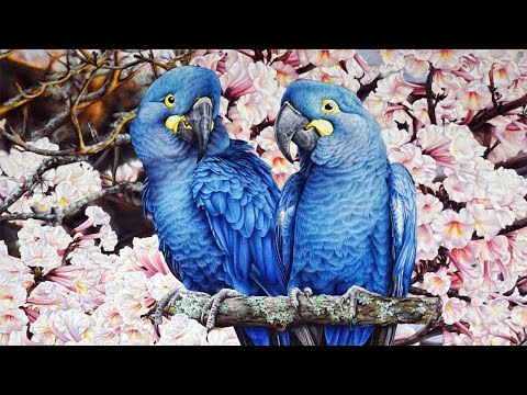 lear's-macaw-and-tabebuia---part-4